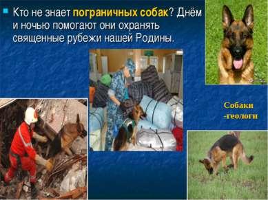 Кто не знает пограничных собак? Днём и ночью помогают они охранять священные ...