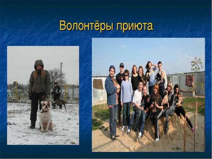 Волонтёры приюта