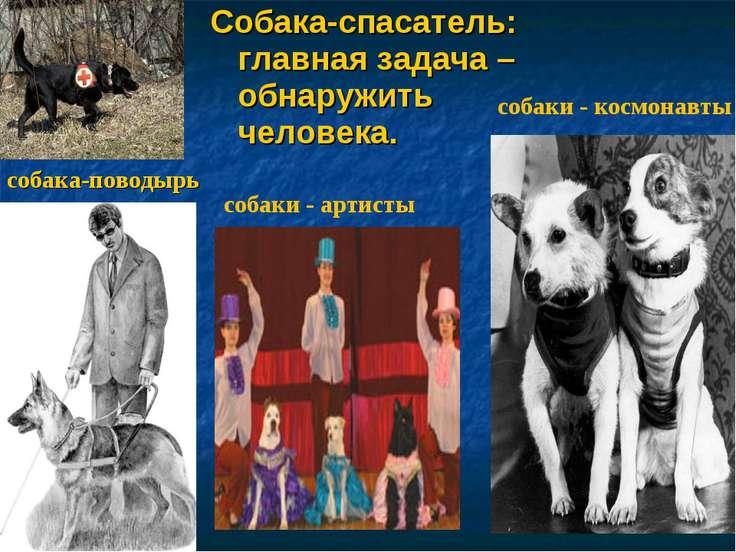 Собака-спасатель: главная задача – обнаружить человека. собака-поводырь собак...