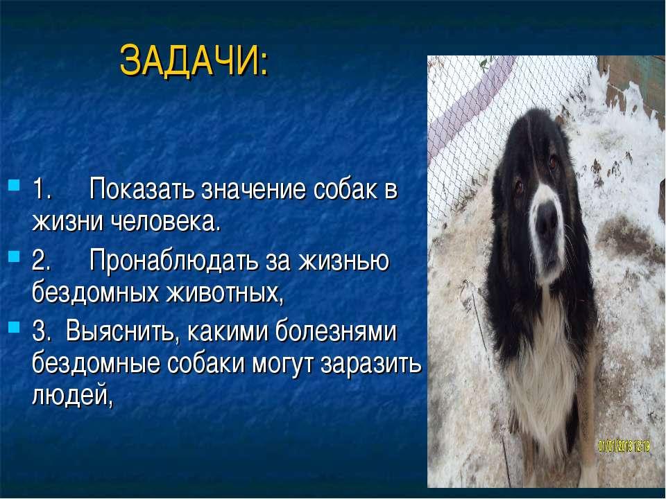 ЗАДАЧИ: 1. Показать значение собак в жизни человека. 2. Пронаблюдать ...