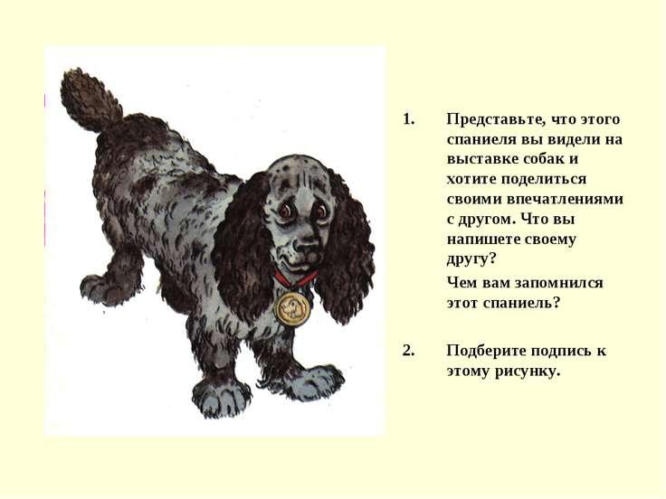 Представьте, что этого спаниеля вы видели на выставке собак и хотите поделить...