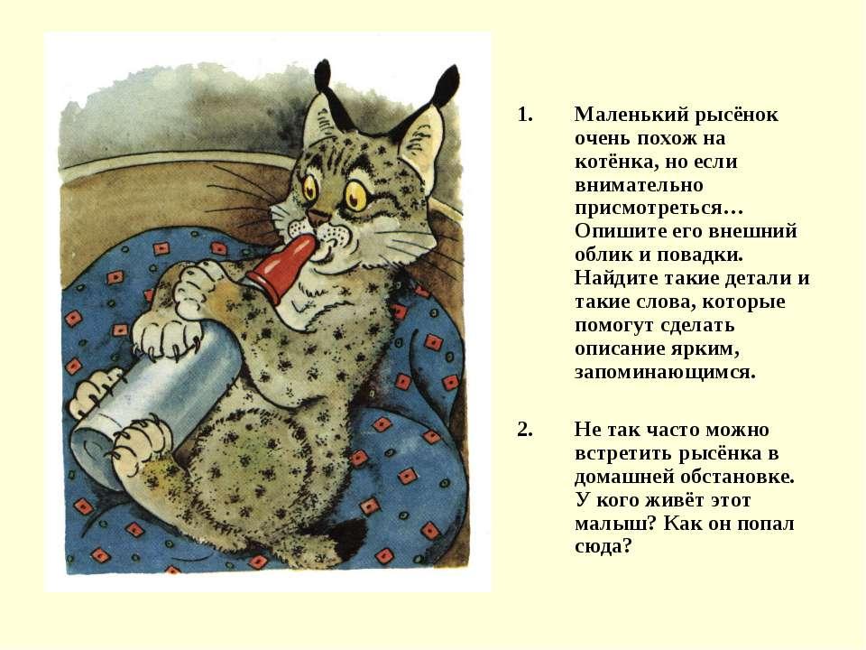 Маленький рысёнок очень похож на котёнка, но если внимательно присмотреться… ...
