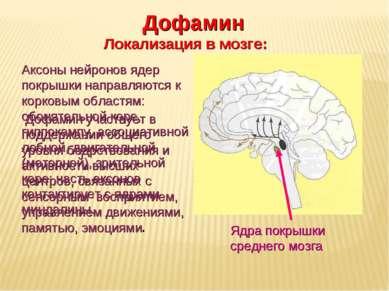 Дневное отделение фармацевтического факультета Ядра покрышки среднего мозга Д...