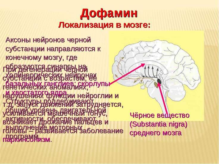 Дневное отделение фармацевтического факультета Чёрное вещество (Substantia ni...