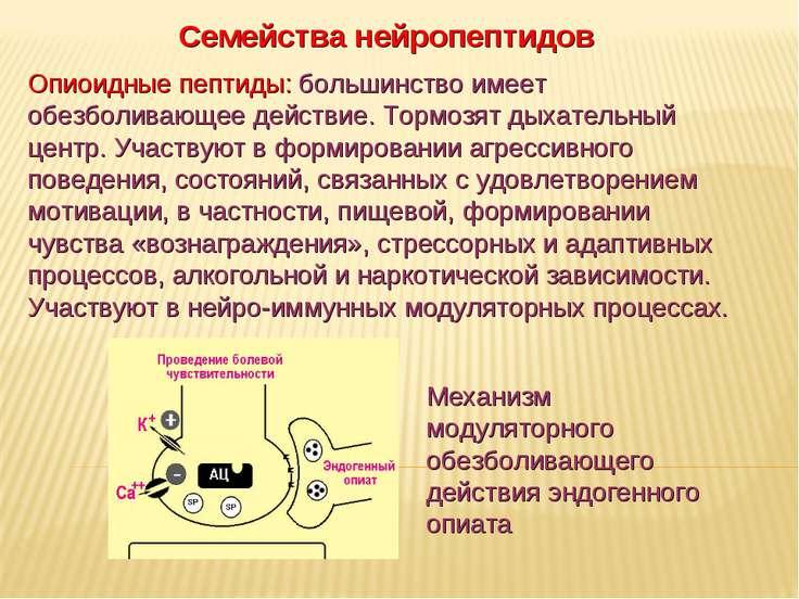 Дневное отделение фармацевтического факультета Семейства нейропептидов Опиоид...