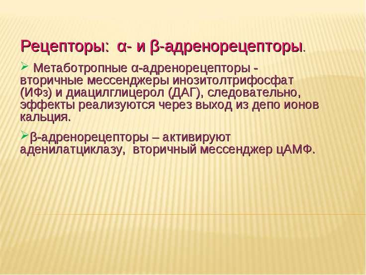 Дневное отделение фармацевтического факультета Рецепторы: α- и β-адренорецепт...