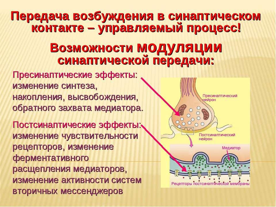 Дневное отделение фармацевтического факультета Передача возбуждения в синапти...