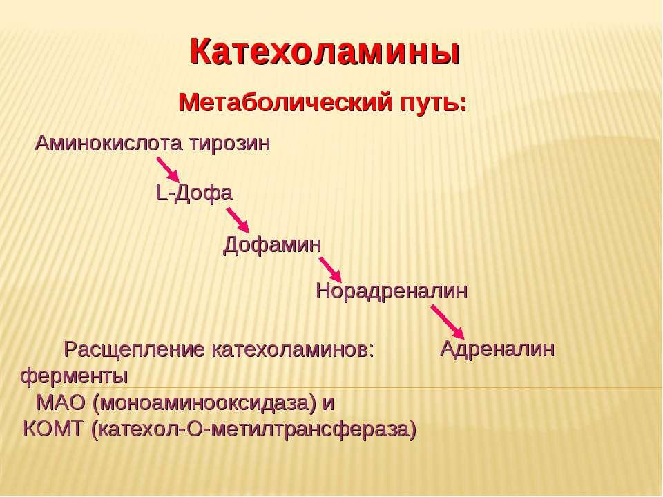 Дневное отделение фармацевтического факультета Метаболический путь: Катехолам...