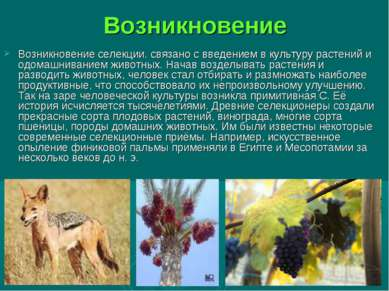 Возникновение Возникновение селекции. связано с введением в культуру растений...
