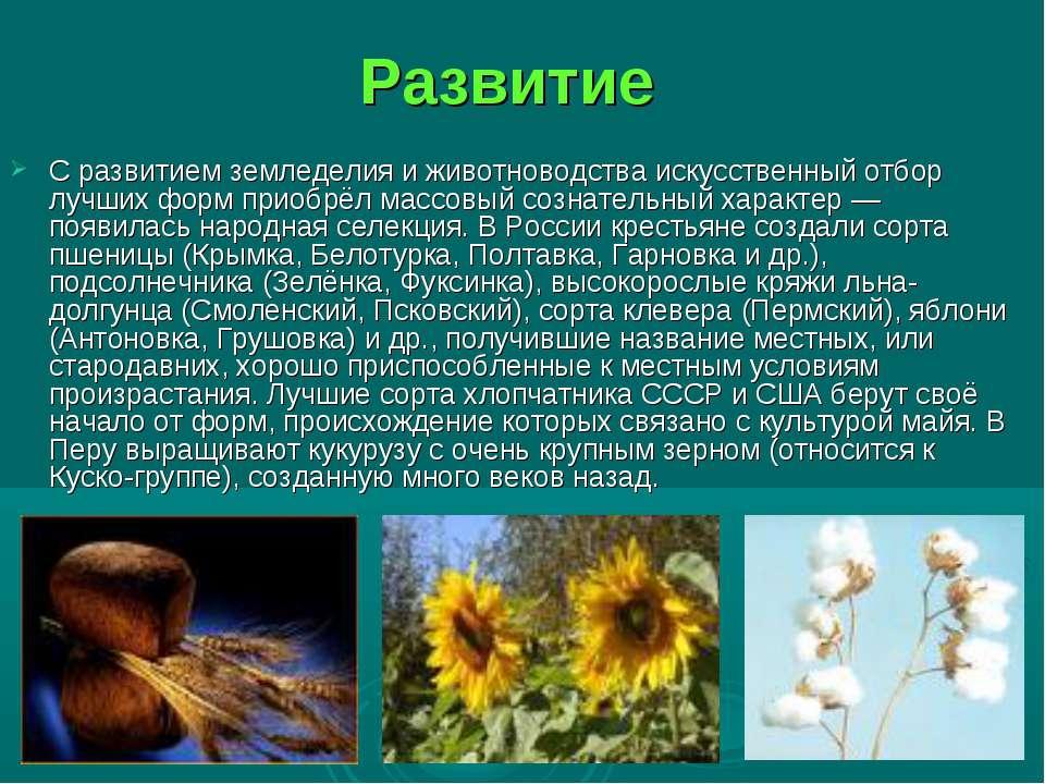 Развитие С развитием земледелия и животноводства искусственный отбор лучших ф...