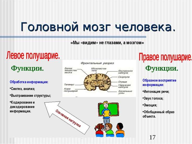 Головной мозг человека. =Мы «видим» не глазами, а мозгом= Обработка информаци...