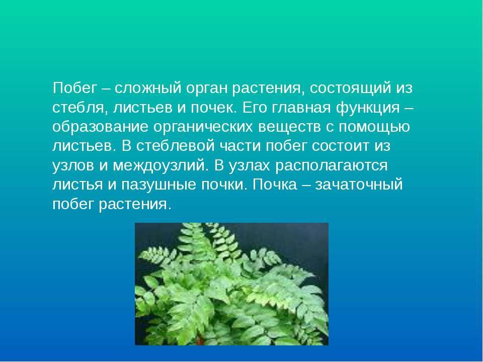 Побег – сложный орган растения, состоящий из стебля, листьев и почек. Его гла...