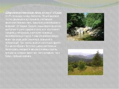 Широколиственные леса занимают в Крыму 91.9% площади лесных биотопов. Общий в...