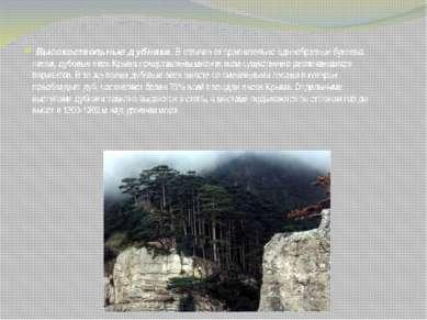 Высокоствольные дубняки. В отличие от сравнительно однообразных буковых лесов...