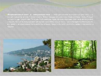 Можжевеловые леса и смешанные леса с преобладанием можжевельника распростране...