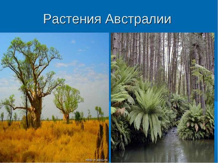 Растения Австралии