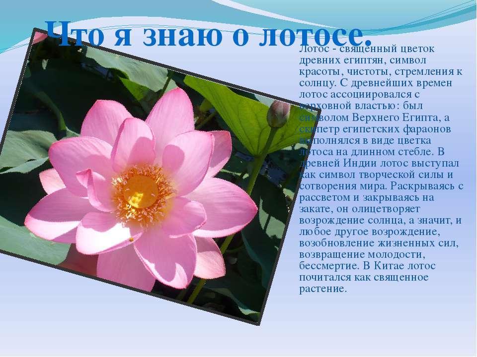 Лотос - священный цветок древних египтян, символ красоты, чистоты, стремления...