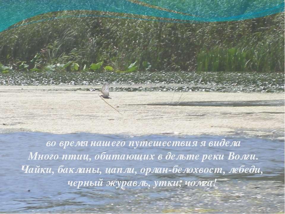 во время нашего путешествия я видела Много птиц, обитающих в дельте реки Волг...