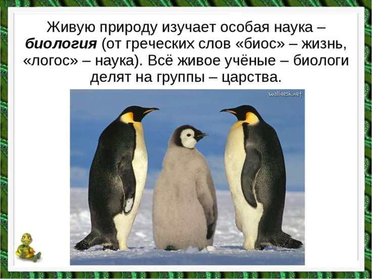 Живую природу изучает особая наука – биология (от греческих слов «биос» – жиз...