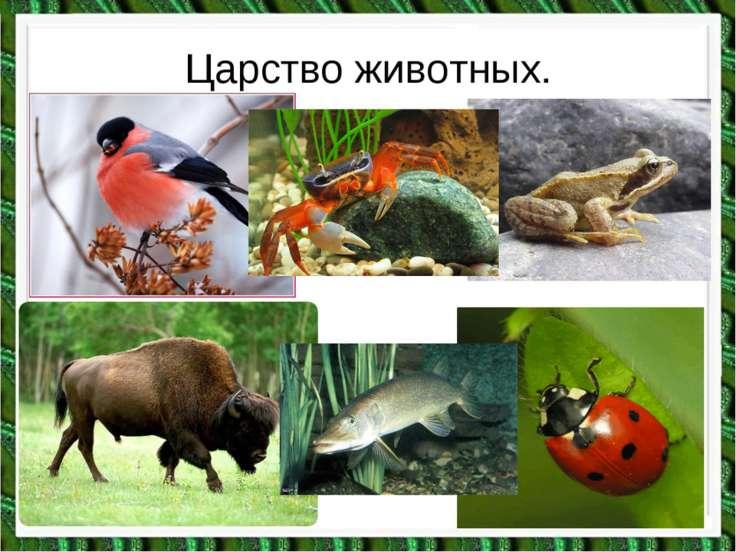 Царство животных.