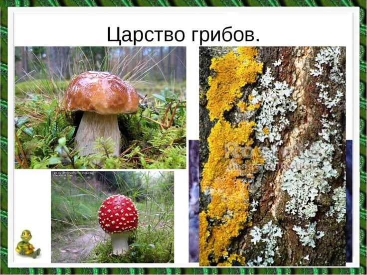 Царство грибов.