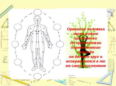 Организм человека тоже живет циклически по прошествии определенного периода о...