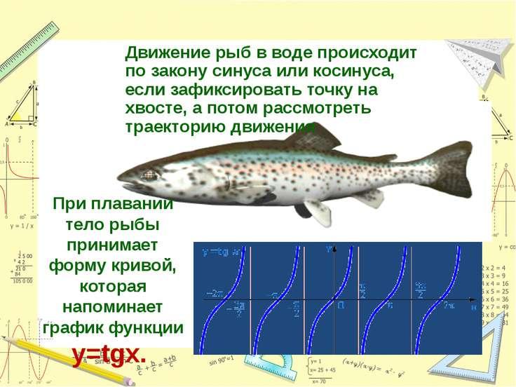Движение рыб в воде происходит по закону синуса или косинуса, если зафиксиров...