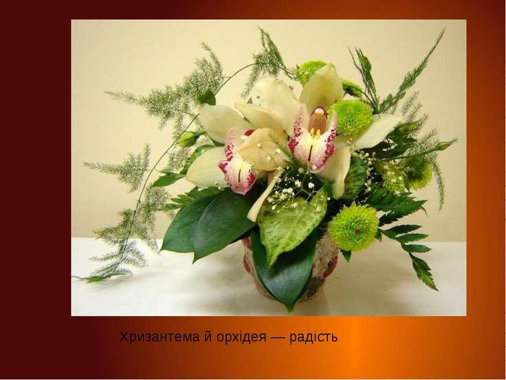 Хризантема й орхідея — радість Хризантема й орхідея — радість