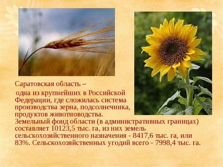 Саратовская область – одна из крупнейших в Российской Федерации, где сложилас...