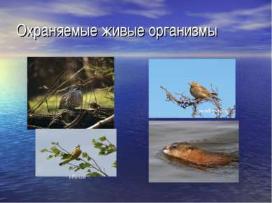 Охраняемые живые организмы иволга жаворонок