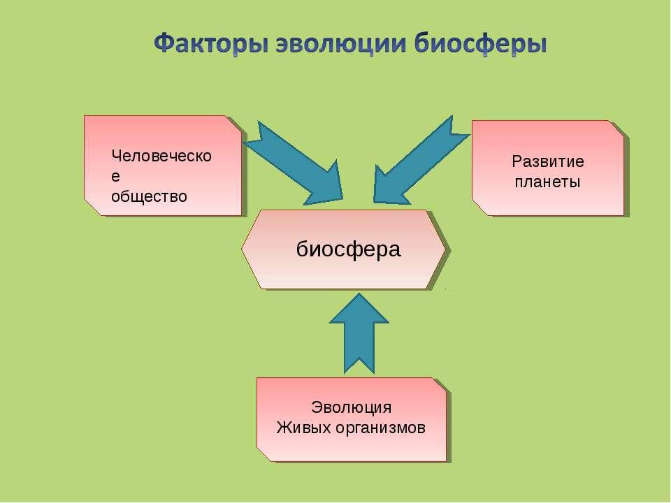 Человеческое общество Развитие планеты Эволюция Живых организмов биосфера