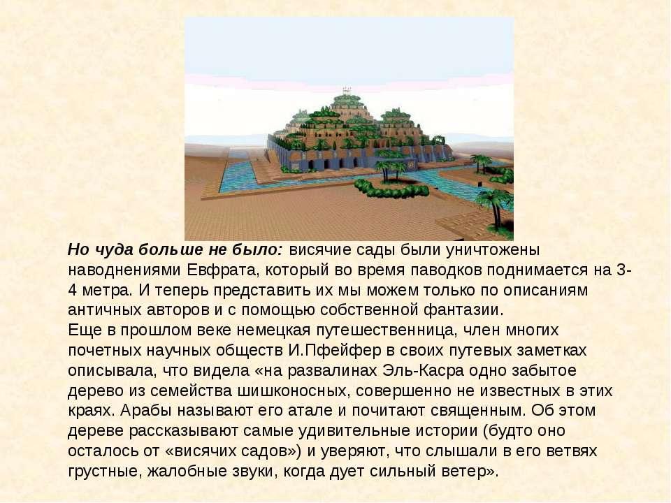 Но чуда больше не было: висячие сады были уничтожены наводнениями Евфрата, ко...