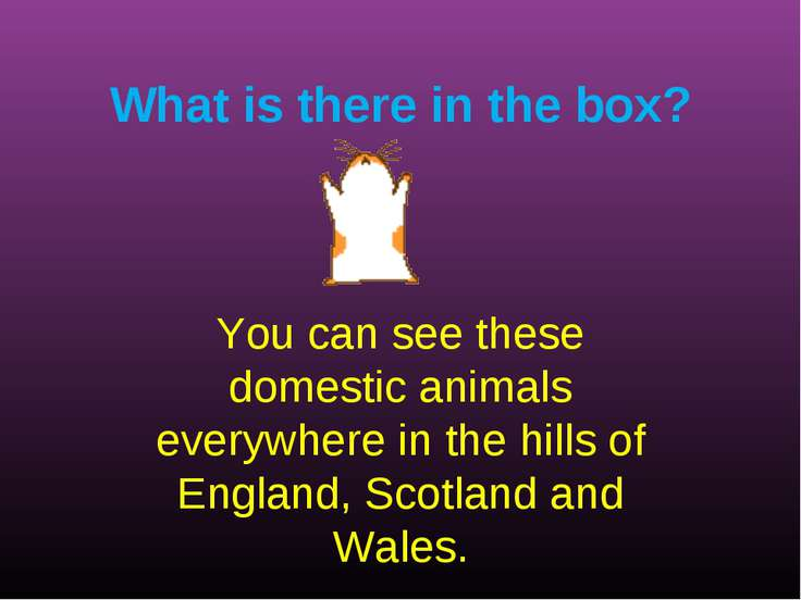 What is there in the box? You can see these domestic animals everywhere in th...