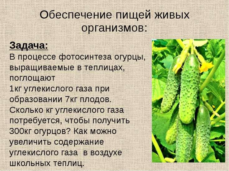 Обеспечение пищей живых организмов: Задача: В процессе фотосинтеза огурцы, вы...