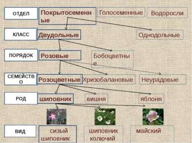 Бактерии Грибы Растения Животные Прокариоты Эукариоты Отдел Водоросли Плаунов...