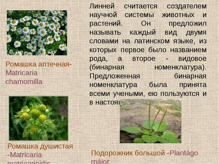 «Ариаднина нить ботаники - система, без которой в ботанике хаос, - писал К.Ли...