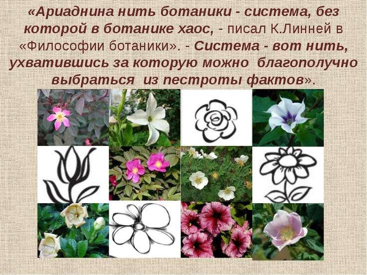 майский шиповник (Rosa majalis)