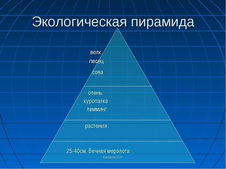 Корниенко О.Ю. Экологическая пирамида волк песец сова олень куропатка лемминг...