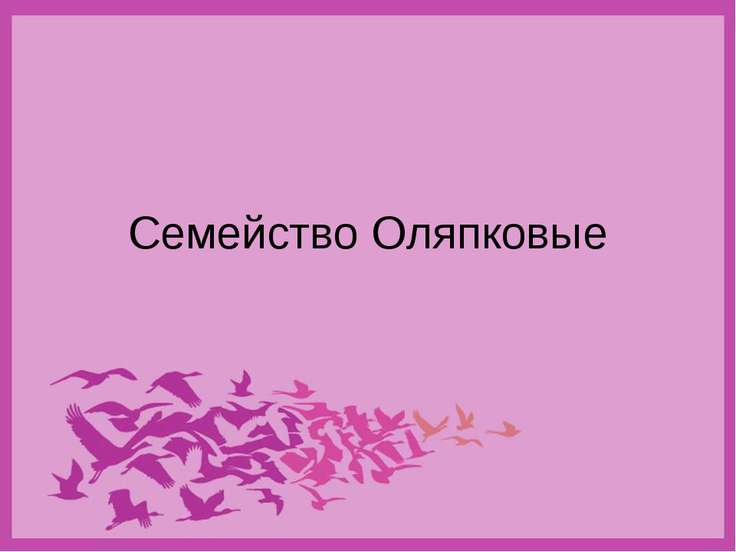 Семейство Оляпковые