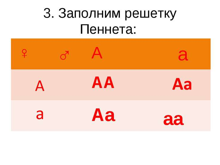 3. Заполним решетку Пеннета: А а АА Аа аа ♂ ♀