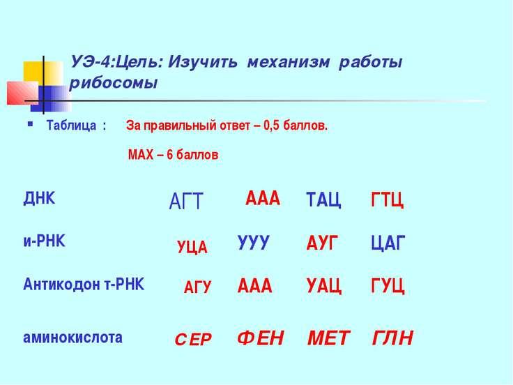 УЭ-4:Цель: Изучить механизм работы рибосомы Таблица : За правильный ответ – 0...