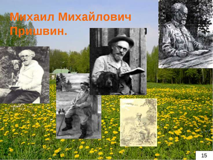 Михаил Михайлович Пришвин. 15
