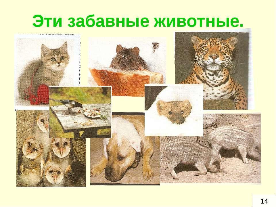 Эти забавные животные. 14