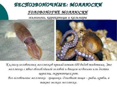 ГОЛОВОНОГИЕ МОЛЛЮСКИ осьминоги, каракатицы и кальмары К классу головоногих мо...