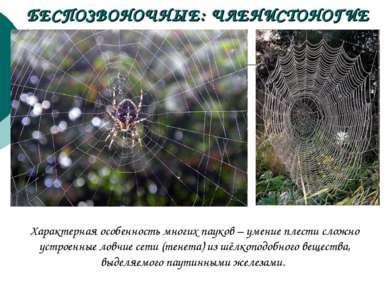 БЕСПОЗВОНОЧНЫЕ: ЧЛЕНИСТОНОГИЕ Характерная особенность многих пауков – умение ...