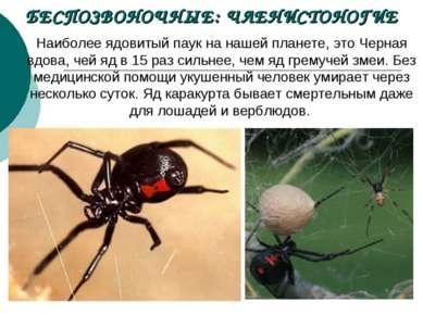 БЕСПОЗВОНОЧНЫЕ: ЧЛЕНИСТОНОГИЕ Наиболее ядовитый паук нанашей планете, это Че...