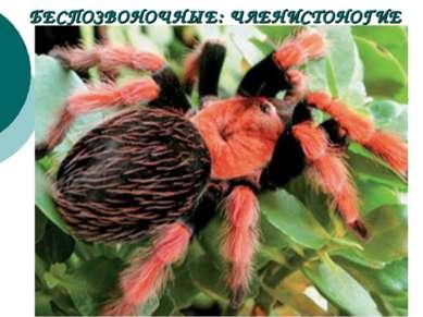 БЕСПОЗВОНОЧНЫЕ: ЧЛЕНИСТОНОГИЕ Поймав добычу (например, насекомое) при помощи ...