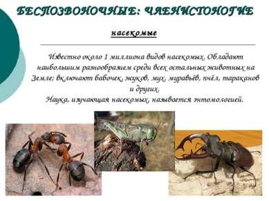 БЕСПОЗВОНОЧНЫЕ: ЧЛЕНИСТОНОГИЕ насекомые Известно около 1миллиона видов насек...