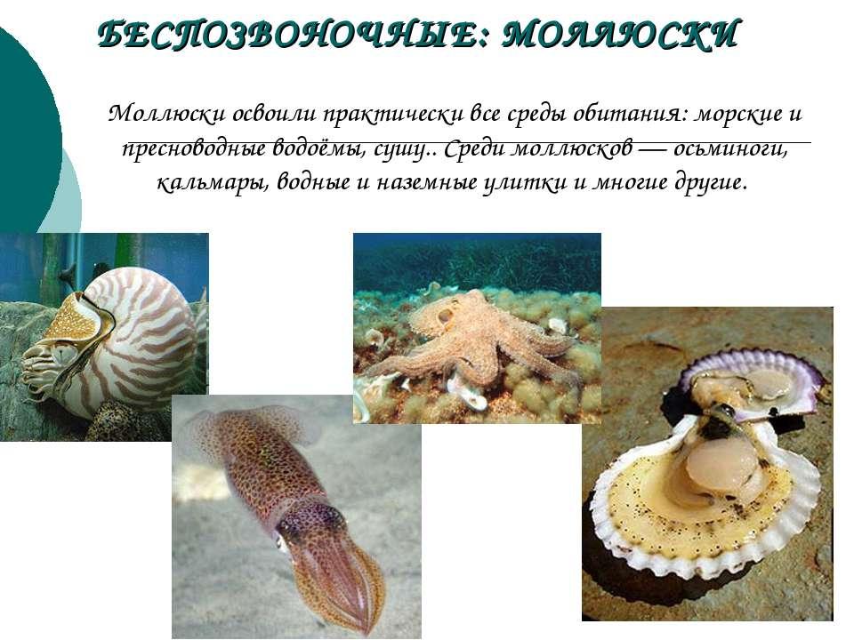 Моллюски освоили практически все среды обитания: морские и пресноводные водоё...