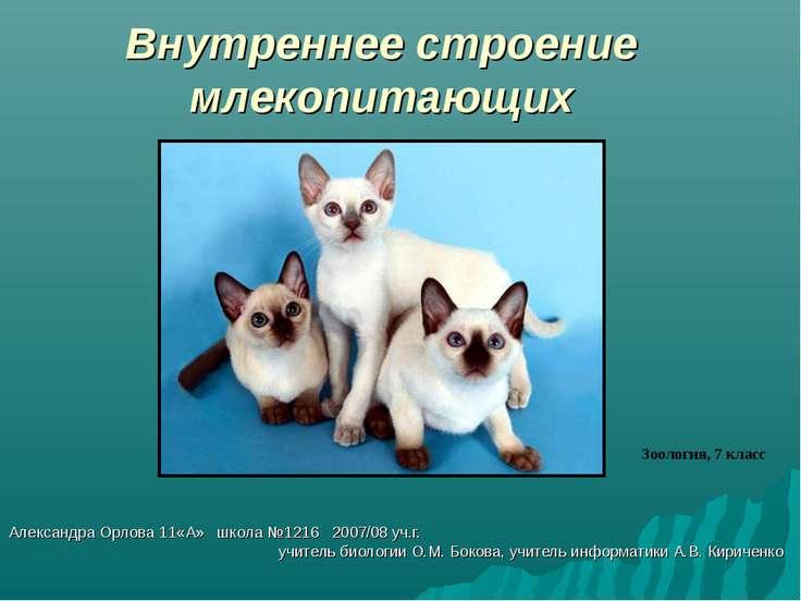 Внутреннее строение млекопитающих Александра Орлова 11«А» школа №1216 2007/08...